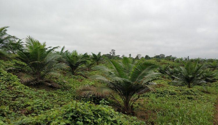 Industri Minyak Sawit Indonesia Menuju 100 Tahun NKRI (Bagian CLXI)